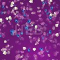 Floral Background with orchids - Hebstreits