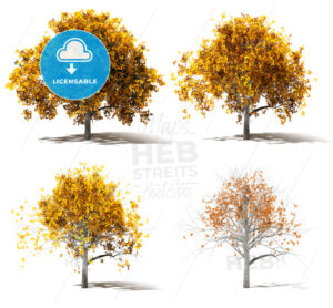 Four Autumn Marple Trees Color change - Hebstreits