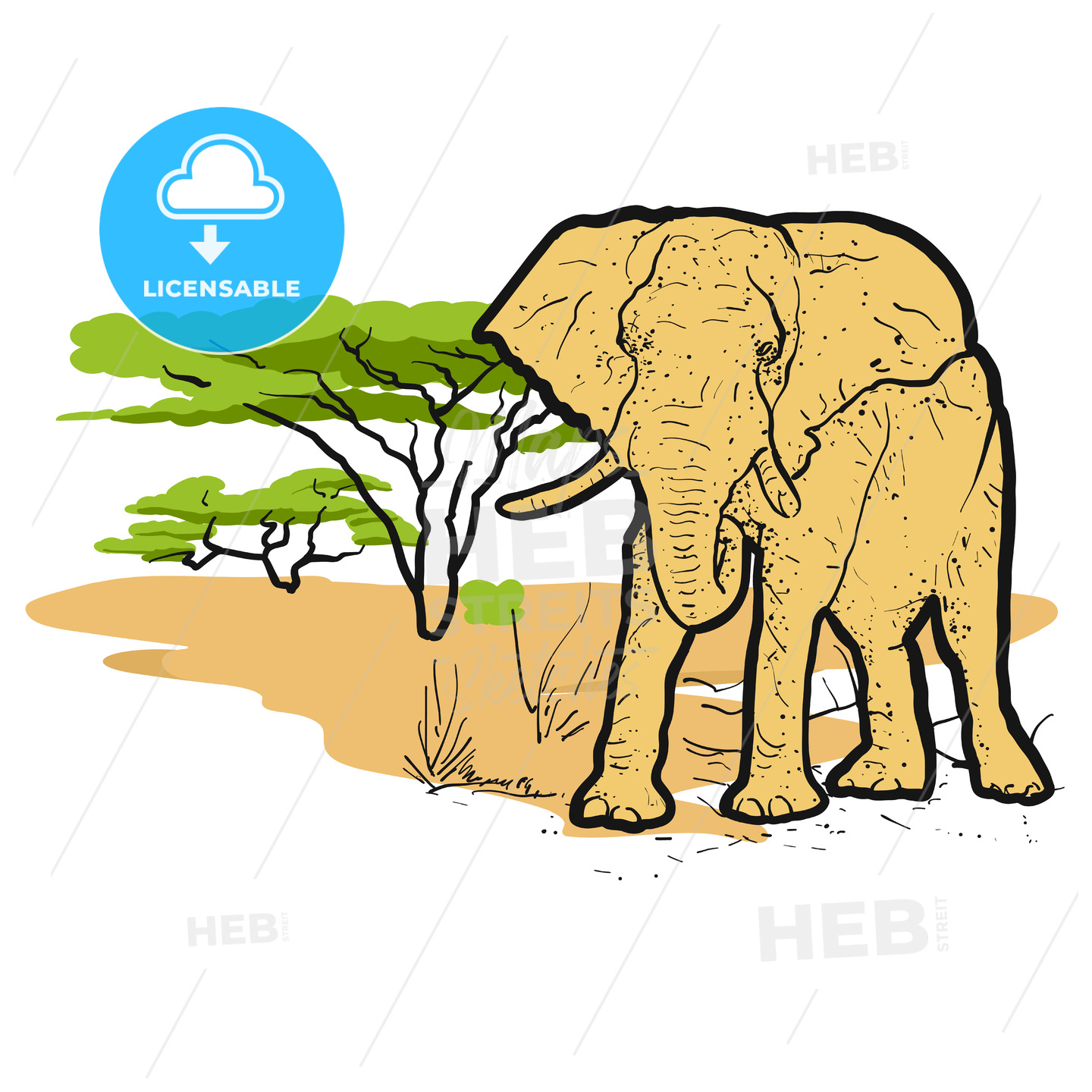 Elephant in savannah Colored Illustration - Hebstreits