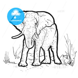 Elephant Outline Illustration - Hebstreits