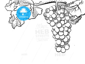 Grapes Vector Hand drawn Sketch - Hebstreits