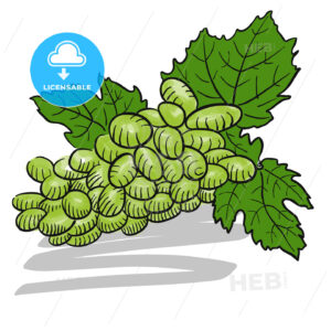 Green colored Sketched Bunch of Grapes - Hebstreits