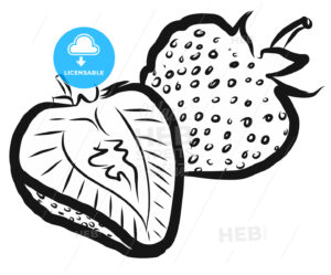 Strawberries Outline Vector Illustration - Hebstreits