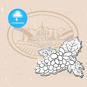 Vineyard and Bunch of Grapes, Background Design - Hebstreits