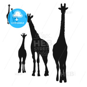Three Giraffes Silhouettes - Hebstreits