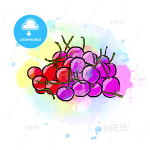 Colored drawing of cherries - HEBSTREITS