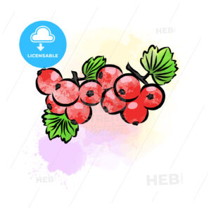 Colored drawing of currant - HEBSTREITS