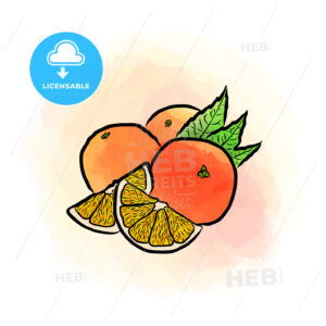 Colored drawing of oranges - HEBSTREITS
