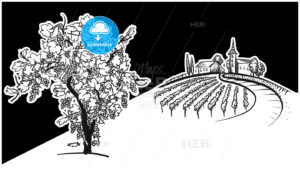 Vine tree and vineyard drawing - HEBSTREITS