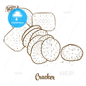 Cracker bread vector drawing - HEBSTREITS Sketches
