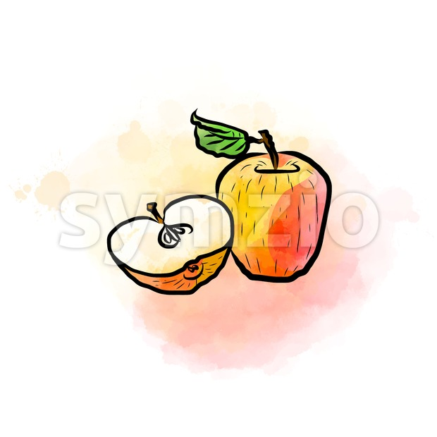 Colored drawing of apples Stock Vector