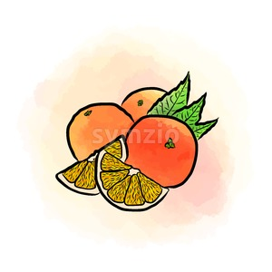 Colored drawing of oranges Stock Vector