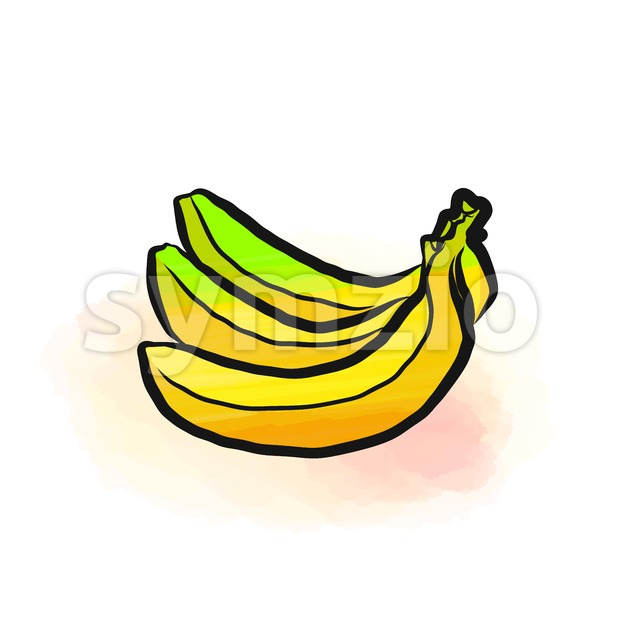 Colored drawing of bananas. Fresh design of colorful fruits made in watercolor style. Modern marketing illustration on white background.