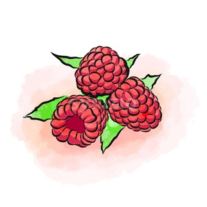 Colored drawing of raspberries Stock Vector