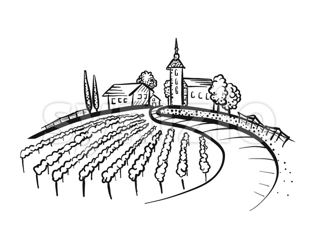 Vineyard Drawing with grapes, path and houses on hill. Hand-drawn vector illustration.