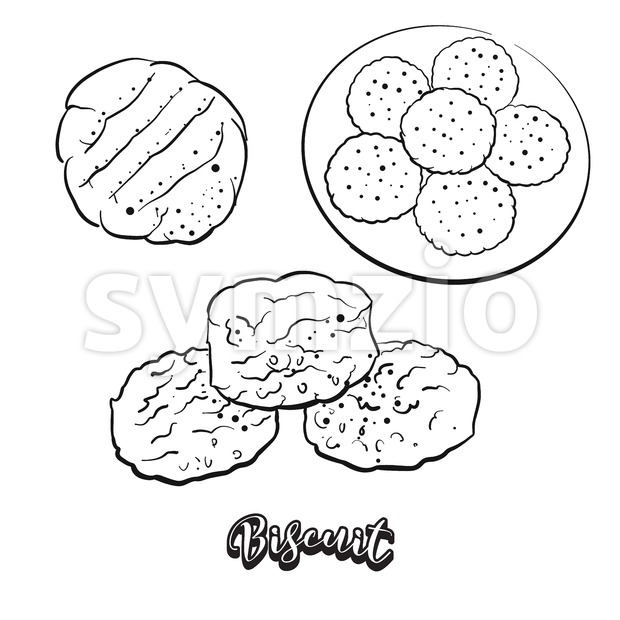 Hand drawn sketch of Biscuit bread Stock Vector