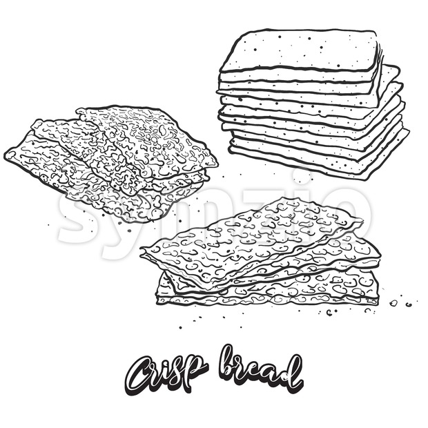 Hand drawn sketch of Crisp bread bread Stock Vector