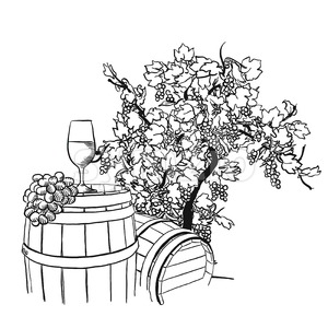 Vine barrel, glass and tree drawing Stock Vector