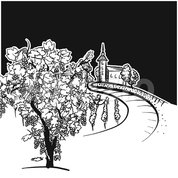 Vine tree and vineyard drawing detail, hand-drawn vector food illustration for vine label and social media marketing