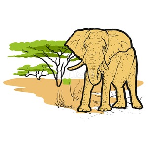 Elephant in savannah Colored Illustration Stock Vector