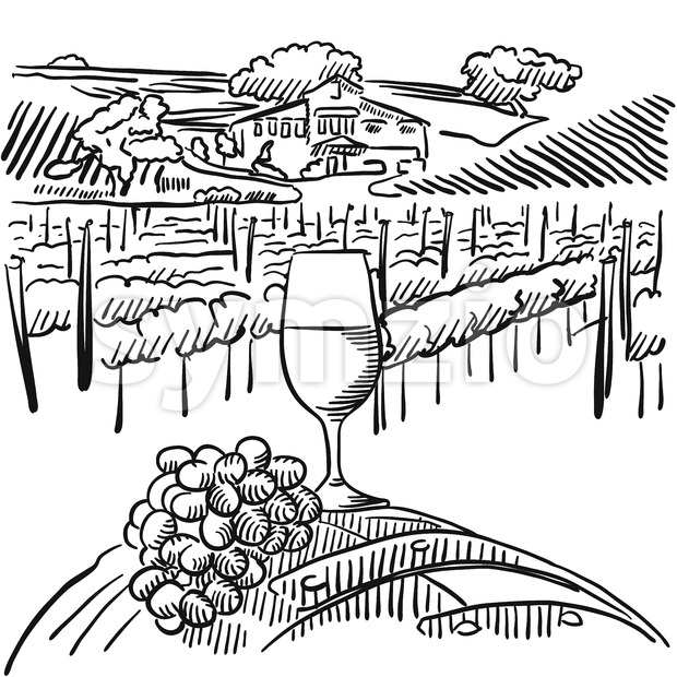 Vineyard with hills and Glass of Vine in Foreground, Vector Outline Sketched Artwork