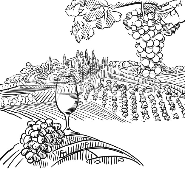 Vineyard Composition with Grapes and Glass of Vine, Vector Sketched Outline Artwork