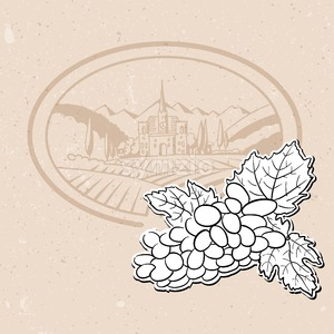 Vineyard and Bunch of Grapes, Background Design Stock Vector