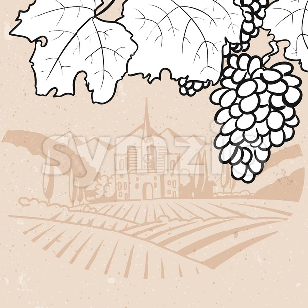 Black and White Grapes in Front of Vintage Vinyard Farm Stock Vector