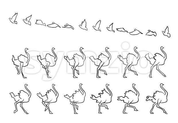 Pigeon and Ostrich framed Fly and Walk, sketched hand-drawn vector Outline Artwork