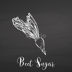 Beet sugar. Chalk on chalkboard. Stock Vector